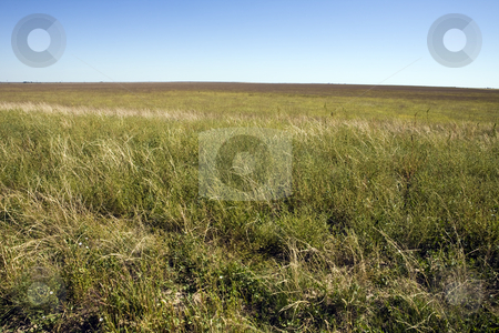 Colorado High Plains stock photo, Tiny wildflowers dot grassland in eastern Colorado by Bart Everett