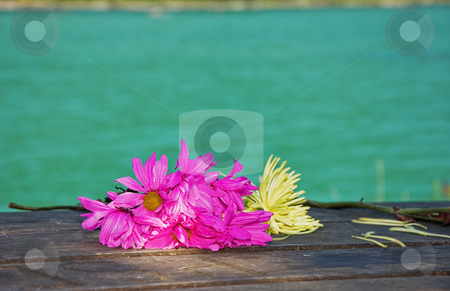Bright Wilting Flowers on Rustic Table stock photo, These bright magenta and yellow flowers are wilting as they are laid on a wooden picnic table at a resort with the gorgeous turquoise water in the background. by Valerie Garner