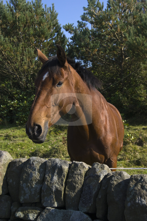 Horse stock photo, Close up of stallion in Peak District National Park by Stephen Meese