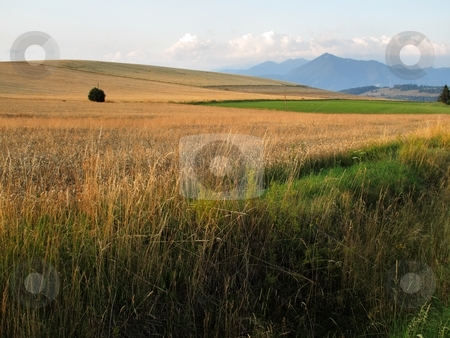 Meadow and crop field stock photo, Meadow and crop field and mountains in morning light by Juraj Kovacik