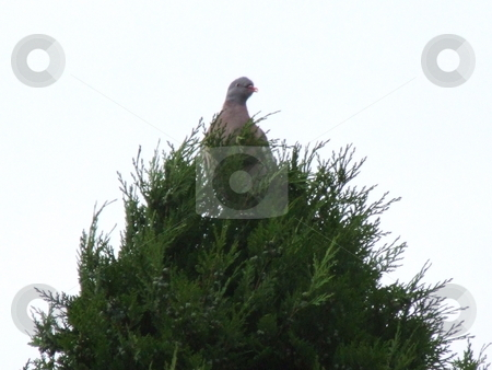Bird at the Top of a Tree stock photo, Bird at the Top of a Tree by Stephen Lambourne
