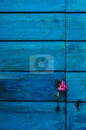 Blue wooden door with flowers stock photo, Image shows a highly textured blue door with some small violet flowers on the handle by Andreas Karelias