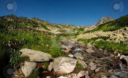 Mountains creek in summer day stock photo, Mountains creek in sunny day with stones, flowers and blue sky by Juraj Kovacik
