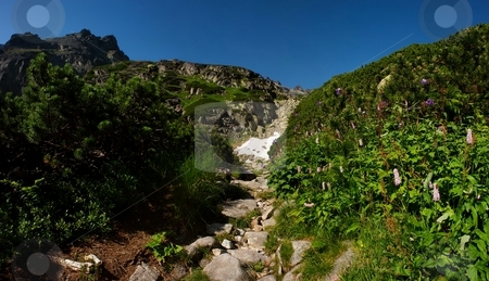 Walking path with flowers stock photo, Walking path in mountains with flowers and blue sky by Juraj Kovacik