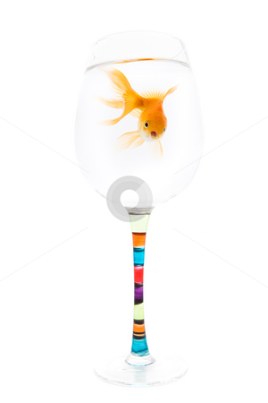Small home stock photo, Goldfish living in a wine glass on white background by Steve Mcsweeny