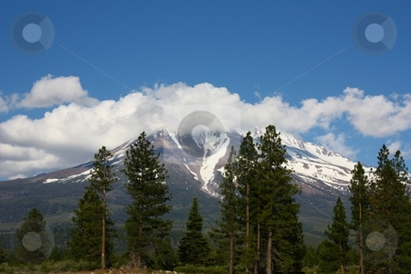 Green forest with Mt Shasta in the background. stock photo, Mt. Shasta by Gregory Dean