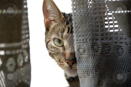 Sneaky cat stock photo,  by Brett Horne