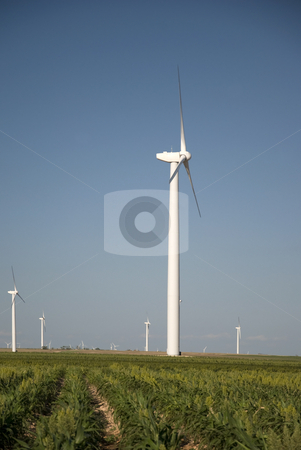 In A Field of Milo stock photo, Wind turbines in a field of milo grain. by Charles Buegeler