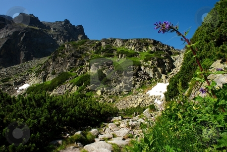 Tall pink flower in mountains stock photo, Tall pink flower with mountain ridge and stone path by Juraj Kovacik