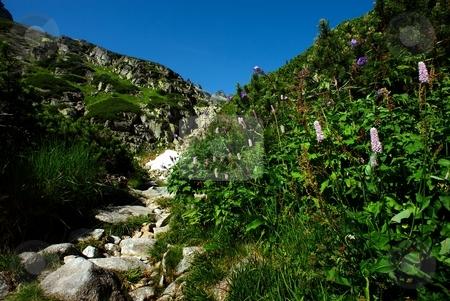 Pink flowers by the stone mountains path stock photo, Pink flowers by the stone mountains path by Juraj Kovacik