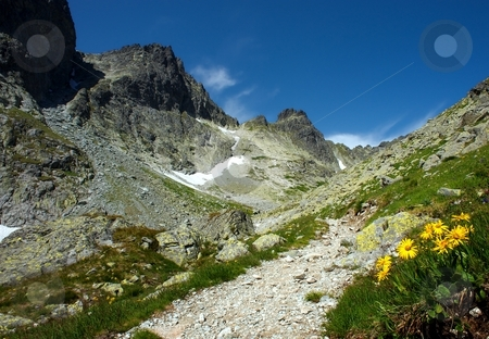 Yellow flowers in mountains stock photo, Yellow flowers in mountains in sunny day by Juraj Kovacik