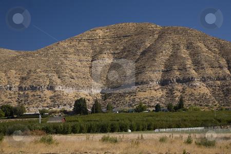 Washington State Apple Farm Yakima Washington stock photo, Washington State Apple Farm, Dry Yakima, Washington, Northwest by William Perry