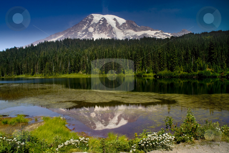 Reflection Lake Snowy Mount Rainier stock photo, Reflection Lake, Snowy Mount Rainier National Park in August by William Perry