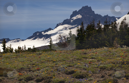 Little Mount Rainier Sunrise Wildflowers Snow  stock photo, Little Mount Rainier Sunrise Wildflowers Snow Mountain, Indian paintbrush, lupine by William Perry