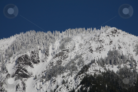Snow Covering Trees and Mountain, Snoqualme Pass, Washington stock photo, Snow Covering Trees and Mountain, Snoqualme Pass, Washington by William Perry