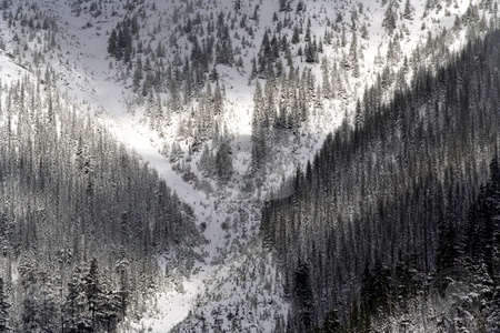 X Marks the Spot--Snowy Trees Snoqualme Washington stock photo, Snowy Trees, Snoqualme Pass, Washington State, Northwest by William Perry