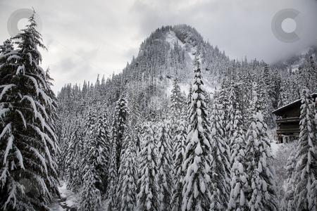 Snow Trees Mountain Ski Lodge Alpental Washington stock photo, Snow Covered Trees Mountain, Ski Lodge, Alpental, Snoqualme Pass, Washington by William Perry