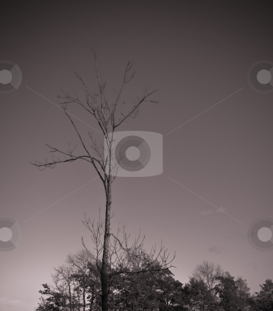Lonely tree and the sky stock photo, Lonely tree and the sky by Fredrik Elfdahl