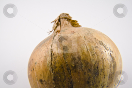 Onion stock photo, Onion in a close-up by Fredrik Elfdahl