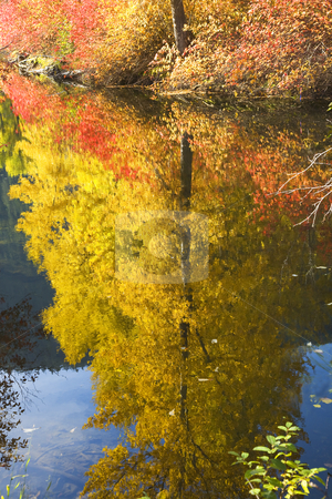 Fall Colors Wenatchee River Yellow Tree Reflections River Steven stock photo, Fall Colors Wenatchee River Yellow Tree Reflections Stevens Pass Leavenworth Washington by William Perry