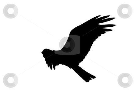 Black eagle stock photo, Black eagle on white backround by Mircea Struteanu