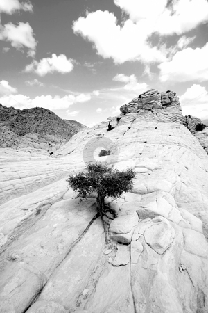 Close up on the Rocks with a Small Tree - Snow Canyon Utah stock photo, Snow Canyon in St. George, Utah - Close up on the Rocks - Black and White by Mehmet Dilsiz