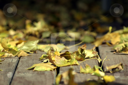 Close up on the Leaves Falling stock photo, Close Up - Leaves on the Deck by Mehmet Dilsiz
