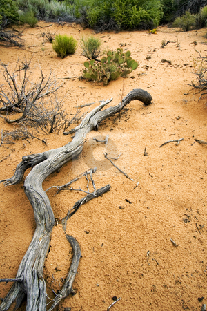 Path to Sand Dunes in Snow Canyon - Utah stock photo, Snow Canyon in St. George, Utah by Mehmet Dilsiz