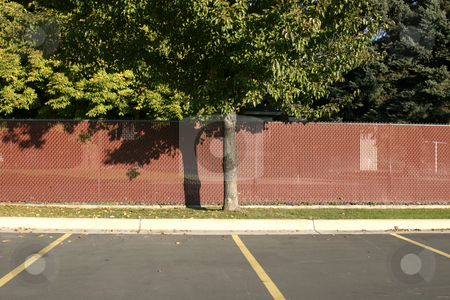 Tree in a Parking Lot stock photo, Fenced Tree in a Parking Lot by Mehmet Dilsiz