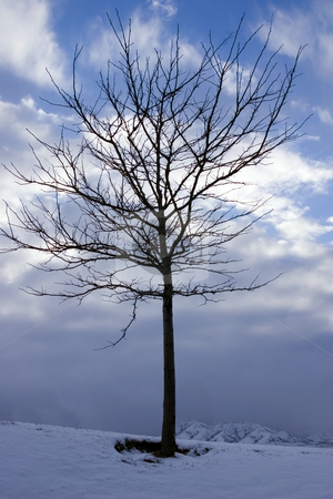 Close up on a Tree in Winter stock photo, Close up on a Lonely Tree in Winter by Mehmet Dilsiz