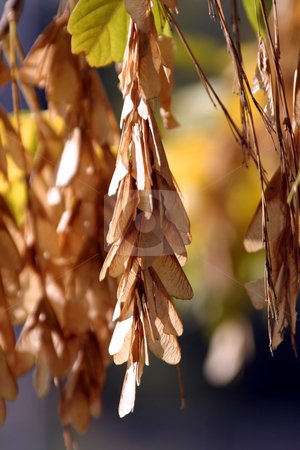 Close up on the Leaves Hanging stock photo, Close Up - Leaves Hanging by Mehmet Dilsiz
