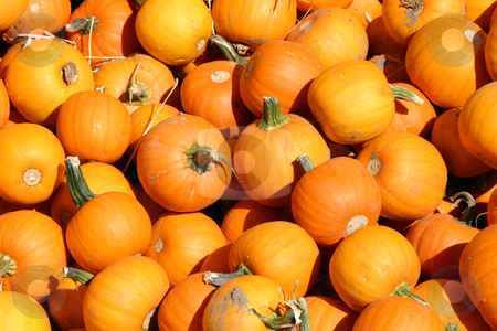 Up Close - Mini Pumpkins stock photo, Close up on a Mini Pumpkins by Mehmet Dilsiz
