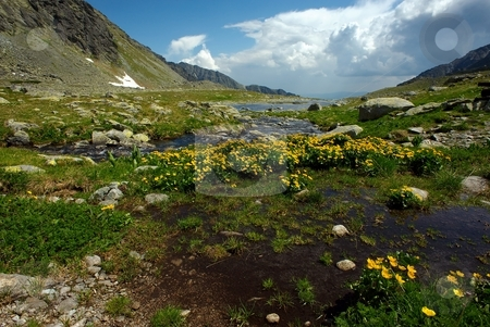 Mountain creek on plateau stock photo, Mountain creek on plateau with yellow flowers in summer day with some clods by Juraj Kovacik