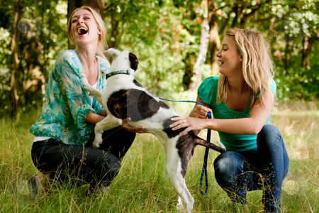 Sisters are playing with the dog stock photo, Two blond girls and a american bulldog in the park by Frenk and Danielle Kaufmann