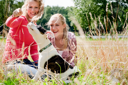 Playing with the dog in the sun stock photo, Two blond girls and a american bulldog in the park by Frenk and Danielle Kaufmann