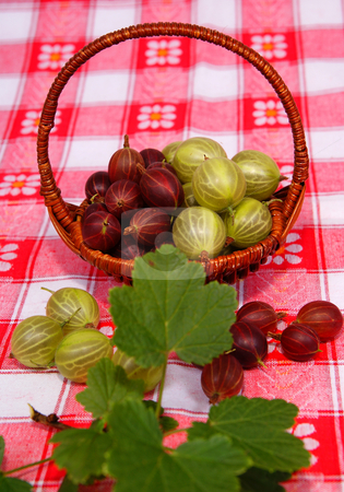 Gooseberry stock photo, Wicker full of gooseberry  on napkin  background by Jolanta Dabrowska