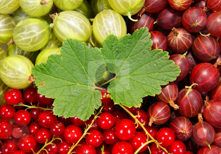 Fruit stock photo, Spilled red and green fruit as background by Jolanta Dabrowska