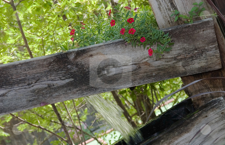 Rustic Flower Scene stock photo, This scene shows rustic boards with water pouring forth and a cute small bouquet of red flowers standing out with lines and patterns forming in interesting shapes. by Valerie Garner