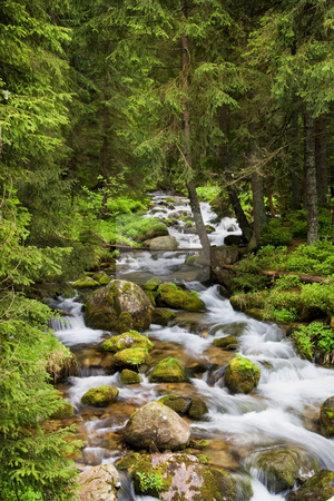 Forest Stream in Tatra Mountains stock photo, Forest stream in the Koscieliska Valley, Tatra Mountains, Poland. by Rognar