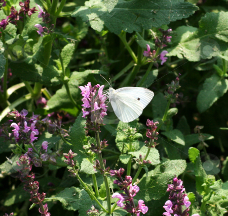 Butterfly stock photo,  by Fabio Alcini