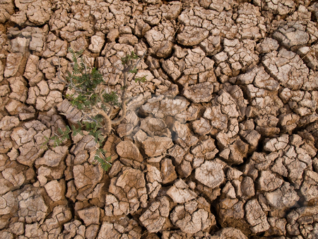 Thorny plant stock photo, A thorny plant growing in a baked earth soil. by Ignacio Gonzalez Prado