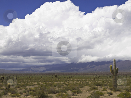 Desert storm stock photo, An arid landscape waits for the storm to come. by Ignacio Gonzalez Prado