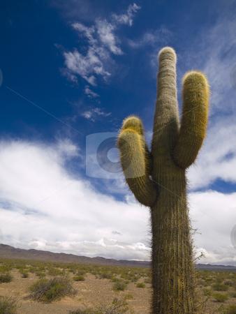Desert totem stock photo, A green cactus over a blue sky with clouds. by Ignacio Gonzalez Prado