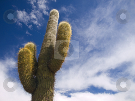 Desert king stock photo, A green cactus over a blue sky with clouds. by Ignacio Gonzalez Prado