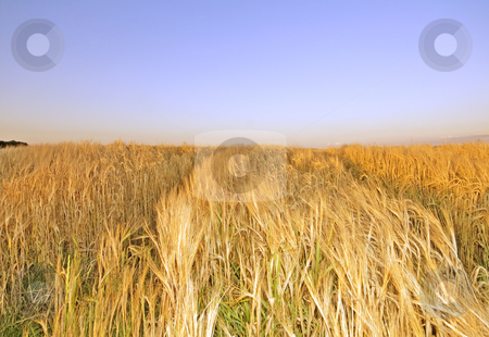 Summer hay field stock photo, Summer hay field at noon with nice sumer glow by Karin Claus