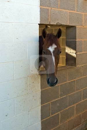 Blaze stock photo, Brown horse with a white blaze looking out a shed window. by Andrew Orlemann