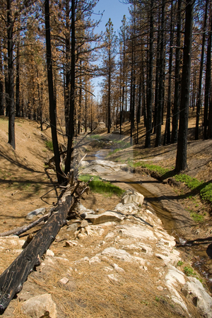 Burned Riparian stock photo, Blackened trees and a small creek in a burned riparian area. by Andrew Orlemann