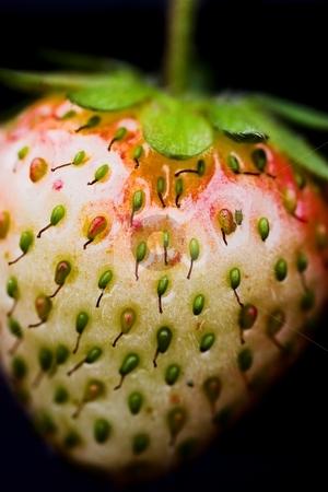 Heart-shaped strawberry stock photo, Close-up of a heart-shaped strawberry on a black background by Dominik Gajerski