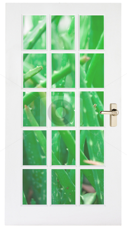 White door with aloe grass behind stock photo, White glass door with golden handle and aloe plant behind it by Dmitry Rostovtsev