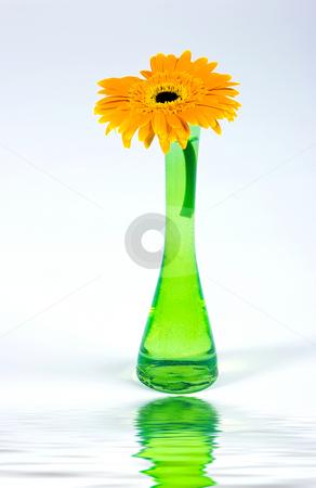 Decorative flower isolated on white stock photo, Decorative flower in glass vase isolated on white background by Dmitry Rostovtsev